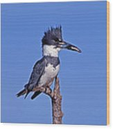 Belted Kingfisher With Fish Wood Print