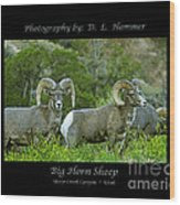 Big Horn Sheep Wood Print