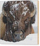 Bison In Snow Wood Print
