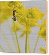 Black Garden Ant On Yellow Flower Wood Print