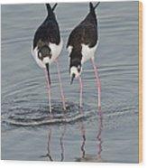 Black-necked Stilt Wood Print