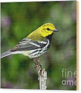 Black Throated Green Warbler Wood Print