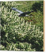 Blue Heron Flight  Wood Print