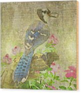 Blue Jay With Texture Wood Print
