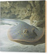 Blue Spotted Fantail Ray  Wood Print