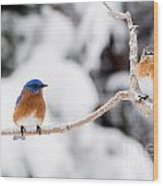 Bluebirds Wood Print