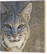 Bobcat Wood Print by William H. Mullins