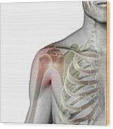 Bones Of The Shoulder Wood Print