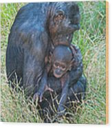 Bonobo Mother And Baby Wood Print