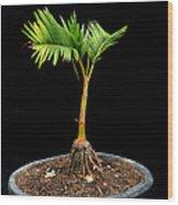 Bonsai Palm Tree Wood Print