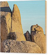 Boulders In A Desert, Joshua Tree Wood Print