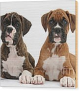 Boxer Puppies Wood Print