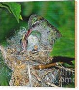 Broad-billed Hummingbird And Young Wood Print