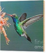 Broad-billed Hummingbird At Ocotillo Wood Print