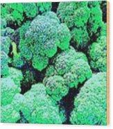 Broccolo Wood Print