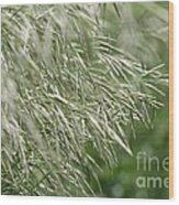 Brome Grass In The Hay Field Wood Print
