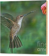 Bronzy Inca Hummingbird Wood Print