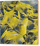 Bull Kelp Blades On Surface Background Texture Wood Print
