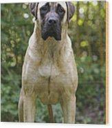 Bullmastiff Dog Wood Print