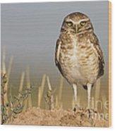 Burrowing Owl Wood Print