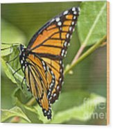 Busy Butterfly Wood Print
