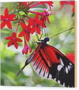 Butterfly On Red Bush Wood Print