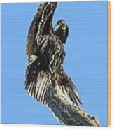 Black Vulture Wood Print