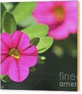 Calibrachoa Named Colorburst Rose Wood Print