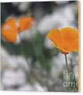 California Poppy Wood Print