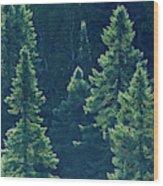 Canada, Ontario Algonquin Provincial Wood Print