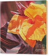 Canna Lily Named Durban Wood Print