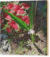 Canna Lily Wood Print