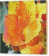 Cannas Wood Print