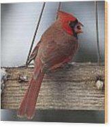 Cardinal Wood Print by John Kunze