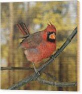 Cardinal Rouge Cardinalis Cardinalis Wood Print