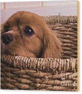 Cavalier King Charles Spaniel Puppy In Basket Wood Print