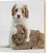 Cavapoo Puppies Hugging Wood Print