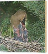 Cedar Waxwings Wood Print by Linda Freshwaters Arndt