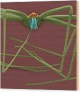 Cellar Spider (physocyclus Mexicanus) Wood Print