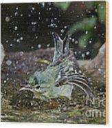 Cerulean Warbler Wood Print