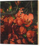 Chaenomeles Wood Print