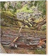 Cheakamus Rainforest Debris Wood Print