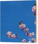 Cherry Blossom Against Blue Sky Wood Print