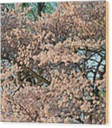 Cherry Blossoms In Pink And Brown Wood Print