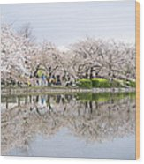 Cherry Blossoms In Tokyo Wood Print