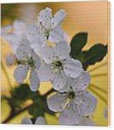 Cherry Flowers Wood Print