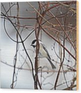 Chickadee On Woodvine Wood Print