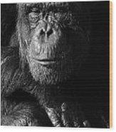 Chimpanzee Monochrome Portrait Wood Print
