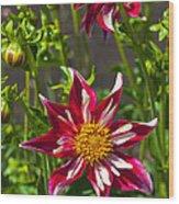 Christmas Star Dahlia And Bee Wood Print