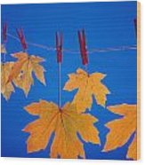 Close-up Of Fall Colored Maple Leaves Wood Print